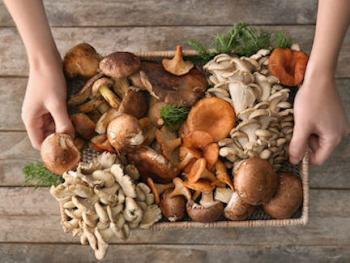 mushroom-magic